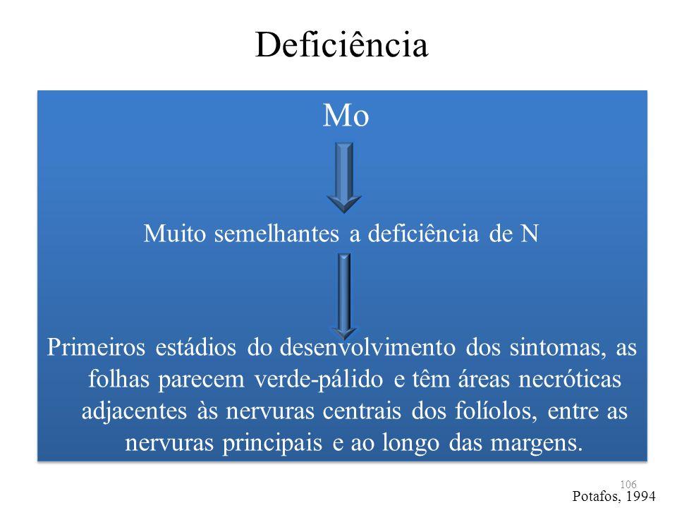 Deficiência Mo Muito semelhantes a deficiência de N Primeiros estádios do desenvolvimento dos sintomas, as folhas parecem verde-pálido e têm áreas nec