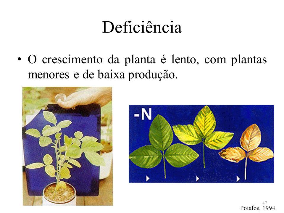 Deficiência O crescimento da planta é lento, com plantas menores e de baixa produção. 47 Potafos, 1994