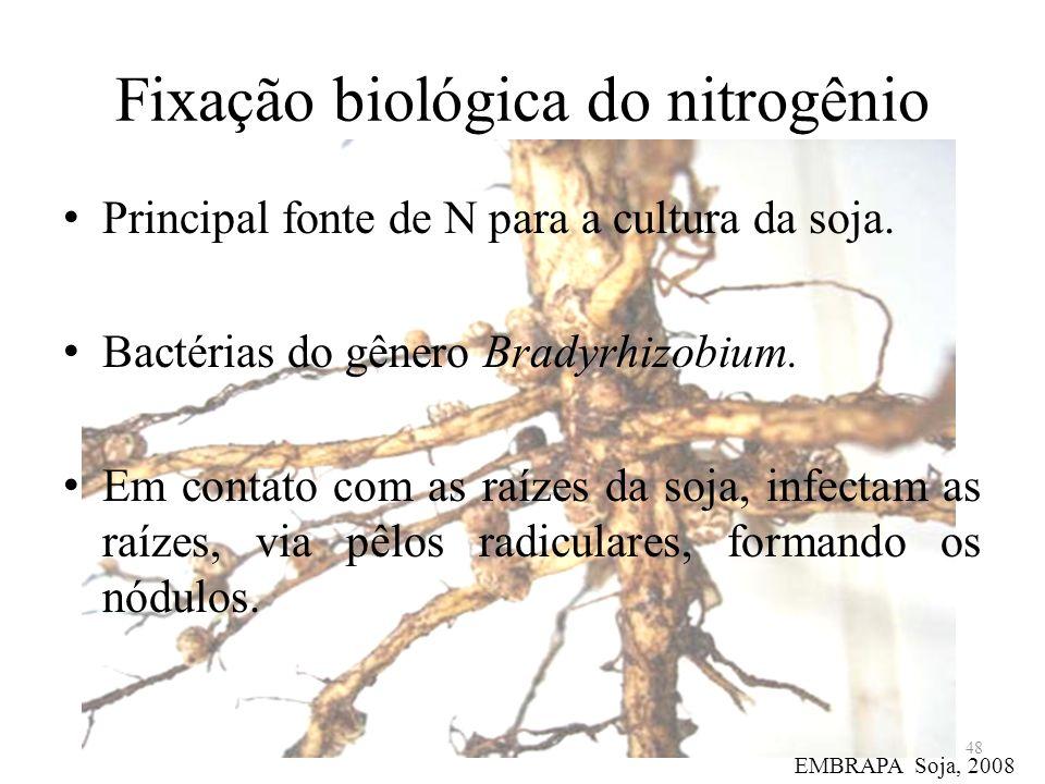 Fixação biológica do nitrogênio Principal fonte de N para a cultura da soja. Bactérias do gênero Bradyrhizobium. Em contato com as raízes da soja, inf