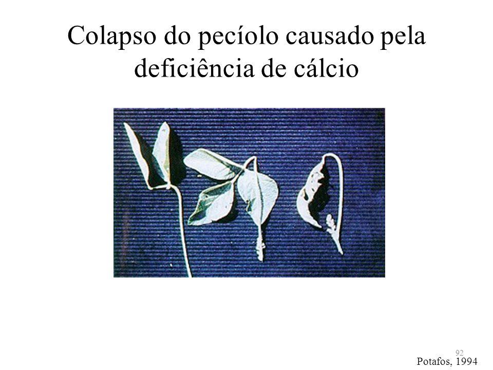 Colapso do pecíolo causado pela deficiência de cálcio 92 Potafos, 1994