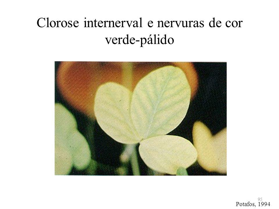 Clorose internerval e nervuras de cor verde-pálido 95 Potafos, 1994