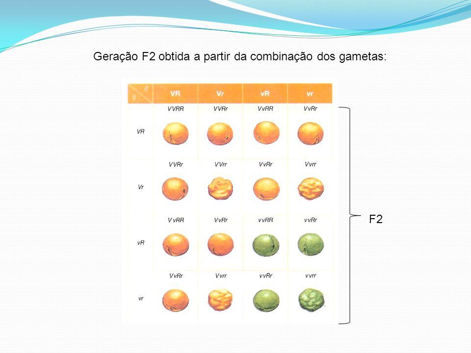 Geração F2 obtida a partir da combinação dos gametas: F2
