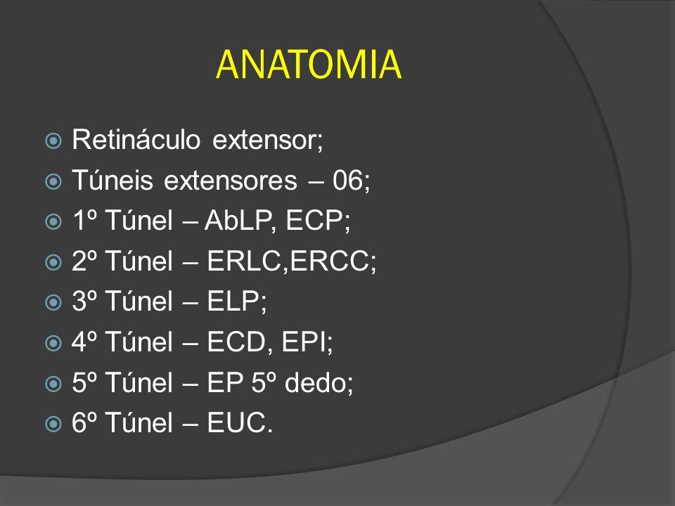 Retináculo extensor; Túneis extensores – 06; 1º Túnel – AbLP, ECP; 2º Túnel – ERLC,ERCC; 3º Túnel – ELP; 4º Túnel – ECD, EPI; 5º Túnel – EP 5º dedo; 6