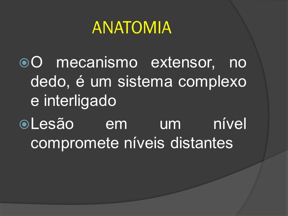 ANATOMIA O mecanismo extensor, no dedo, é um sistema complexo e interligado Lesão em um nível compromete níveis distantes