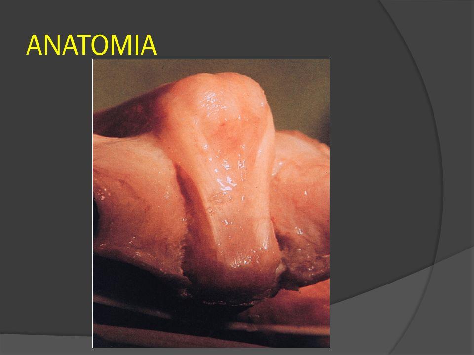 LESÃO FECHADA DA BANDA SAGITAL Flexão ou extensão forçada do dedo; Subluxação ou luxação do tendão extensor Estalidos dolorosos Extensão incompleta do dedo com desvio ulnar dele