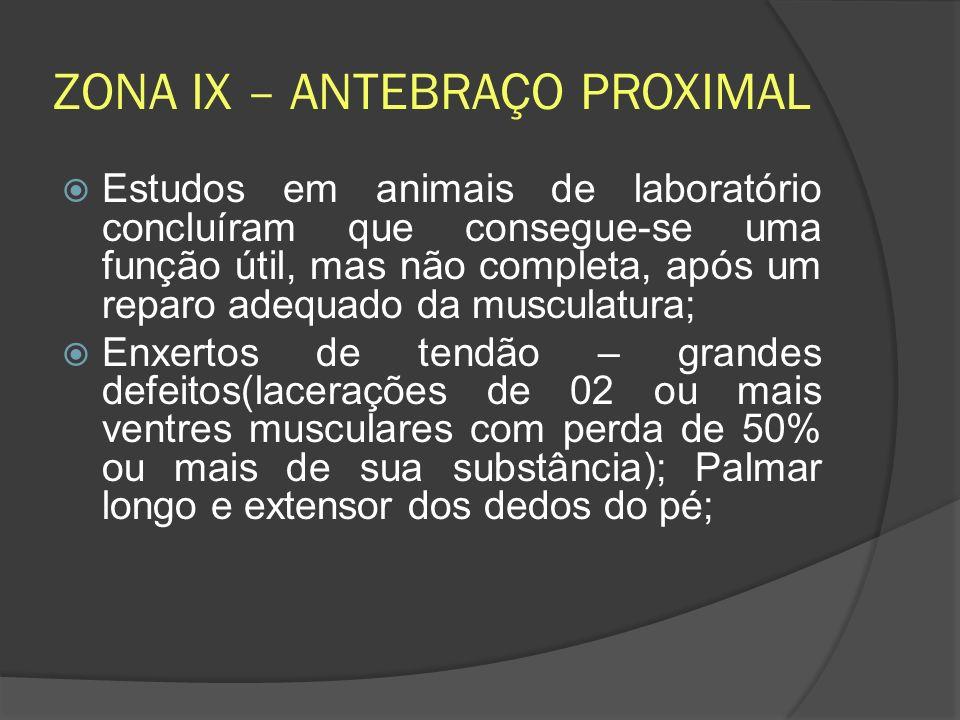 ZONA IX – ANTEBRAÇO PROXIMAL Estudos em animais de laboratório concluíram que consegue-se uma função útil, mas não completa, após um reparo adequado d