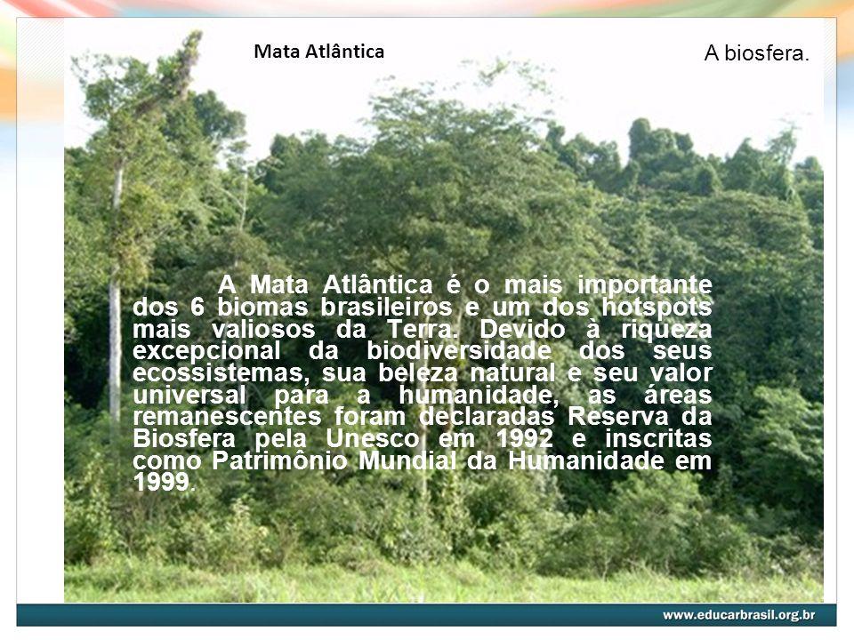 Mata Atlântica A Mata Atlântica é o mais importante dos 6 biomas brasileiros e um dos hotspots mais valiosos da Terra. Devido à riqueza excepcional da