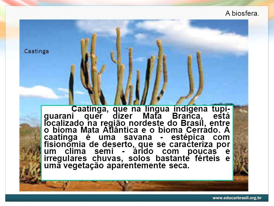 Caatinga Caatinga, que na língua indígena tupi- guarani quer dizer Mata Branca, está localizado na região nordeste do Brasil, entre o bioma Mata Atlân