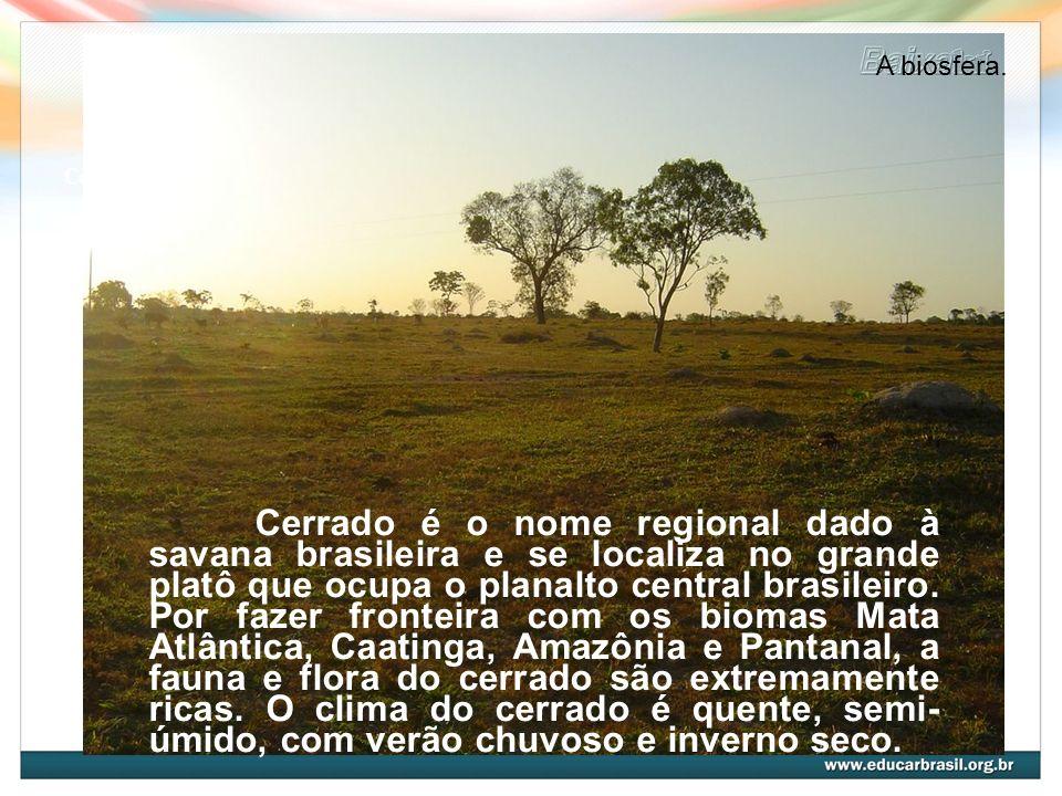 Cerrado Cerrado é o nome regional dado à savana brasileira e se localiza no grande platô que ocupa o planalto central brasileiro. Por fazer fronteira