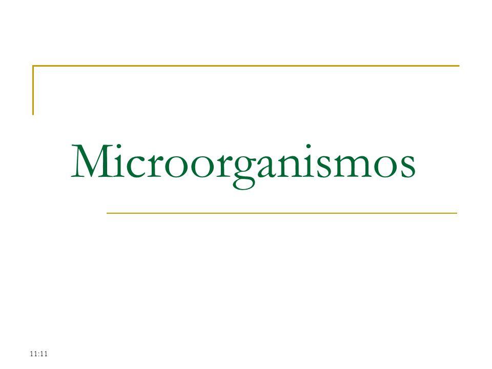 11:11 Microorganismos