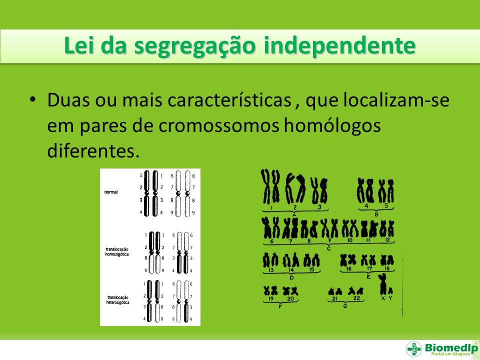 Lei da segregação independente Duas ou mais características, que localizam-se em pares de cromossomos homólogos diferentes.