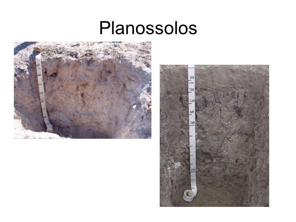 Planossolos