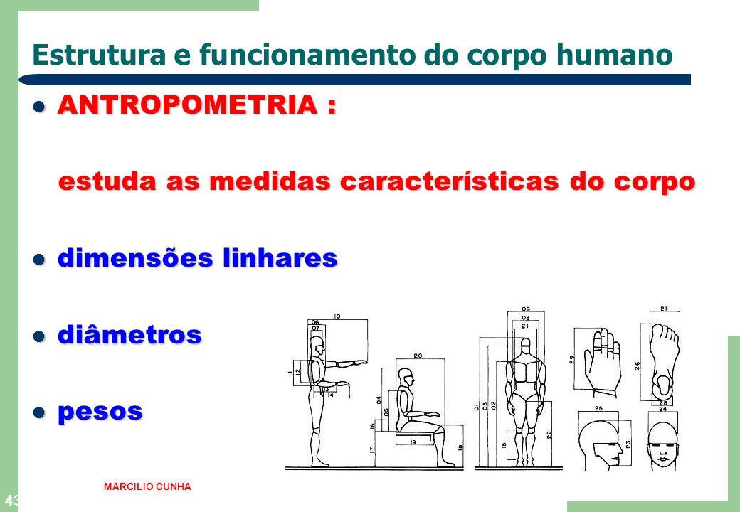 43 Estrutura e funcionamento do corpo humano ANTROPOMETRIA : ANTROPOMETRIA : estuda as medidas características do corpo estuda as medidas característi