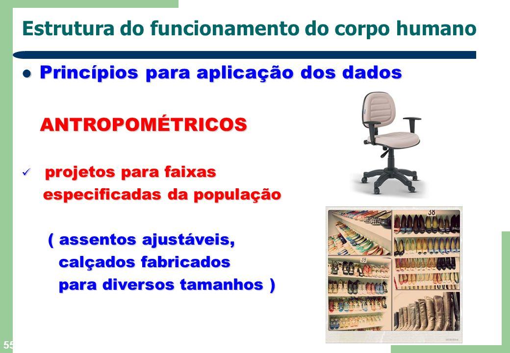 55 Estrutura do funcionamento do corpo humano Princípios para aplicação dos dados Princípios para aplicação dos dados ANTROPOMÉTRICOS ANTROPOMÉTRICOS