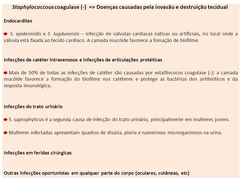 Staphylococcous coagulase (-) => Doenças causadas pela invasão e destruição tecidual Endocardites S. epidermidis e S. lugdunensis – infecção de válvul