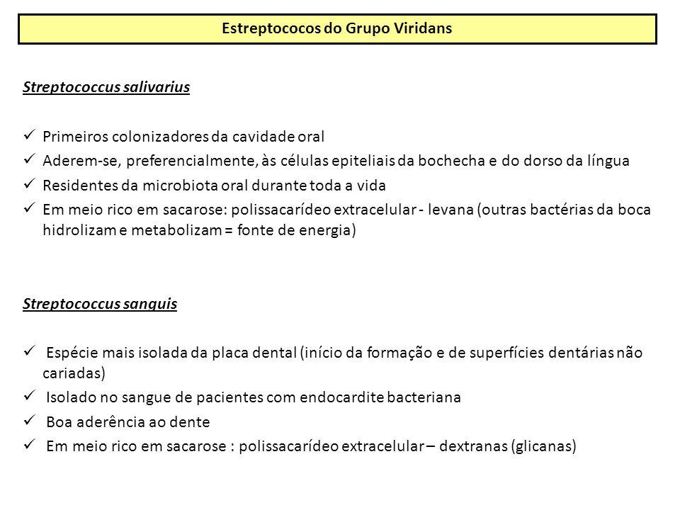 Streptococcus salivarius Primeiros colonizadores da cavidade oral Aderem-se, preferencialmente, às células epiteliais da bochecha e do dorso da língua