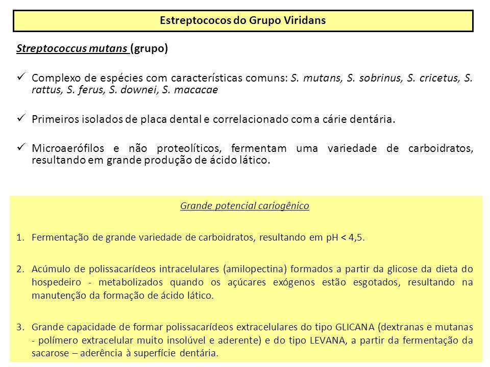 Streptococcus mutans (grupo) Complexo de espécies com características comuns: S.