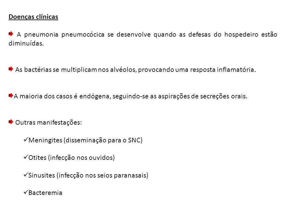 Doenças clínicas A pneumonia pneumocócica se desenvolve quando as defesas do hospedeiro estão diminuídas. As bactérias se multiplicam nos alvéolos, pr