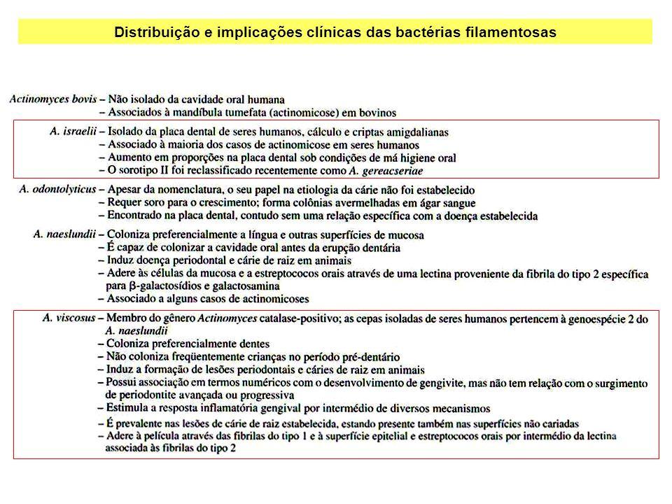 Distribuição e implicações clínicas das bactérias filamentosas
