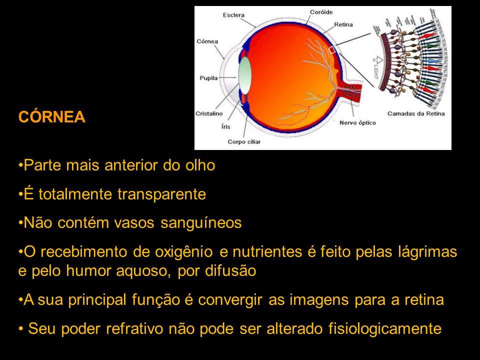 CÓRNEA Parte mais anterior do olho É totalmente transparente Não contém vasos sanguíneos O recebimento de oxigênio e nutrientes é feito pelas lágrimas