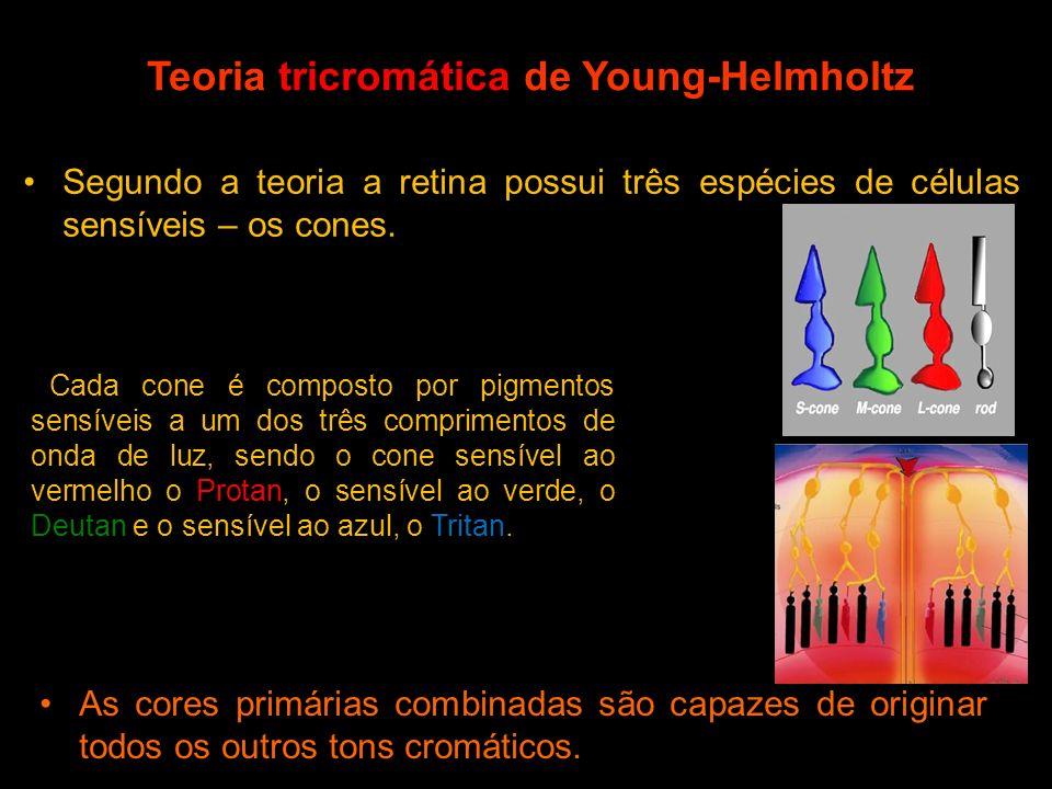 Teoria tricromática de Young-Helmholtz Segundo a teoria a retina possui três espécies de células sensíveis – os cones. Cada cone é composto por pigmen