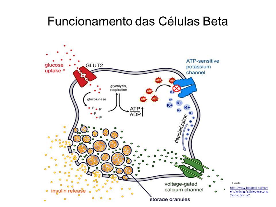 Funcionamento das Células Beta Fonte: http://www.betacell.org/cont ent/articles/articlepanel.php ?aid=1&pid=2 http://www.betacell.org/cont ent/article