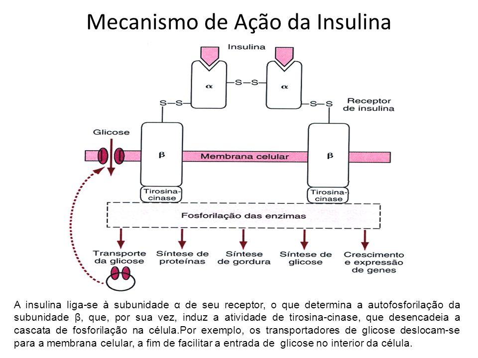 A insulina liga-se à subunidade α de seu receptor, o que determina a autofosforilação da subunidade β, que, por sua vez, induz a atividade de tirosina