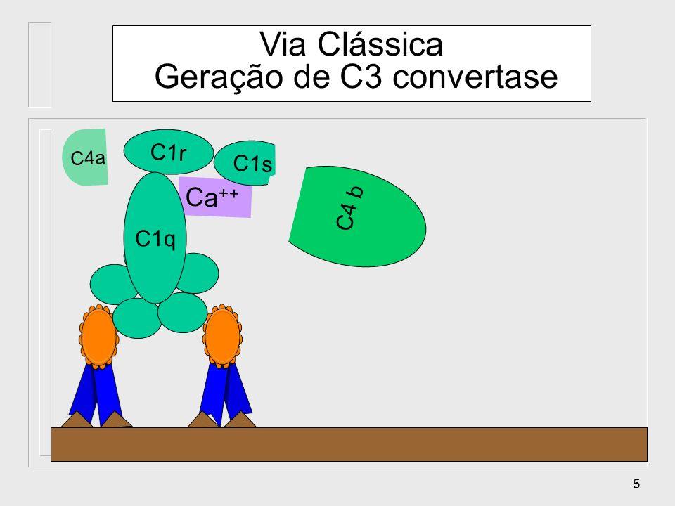 5 Ca ++ C1r C1s C1q C4 C4a b Via Clássica Geração de C3 convertase