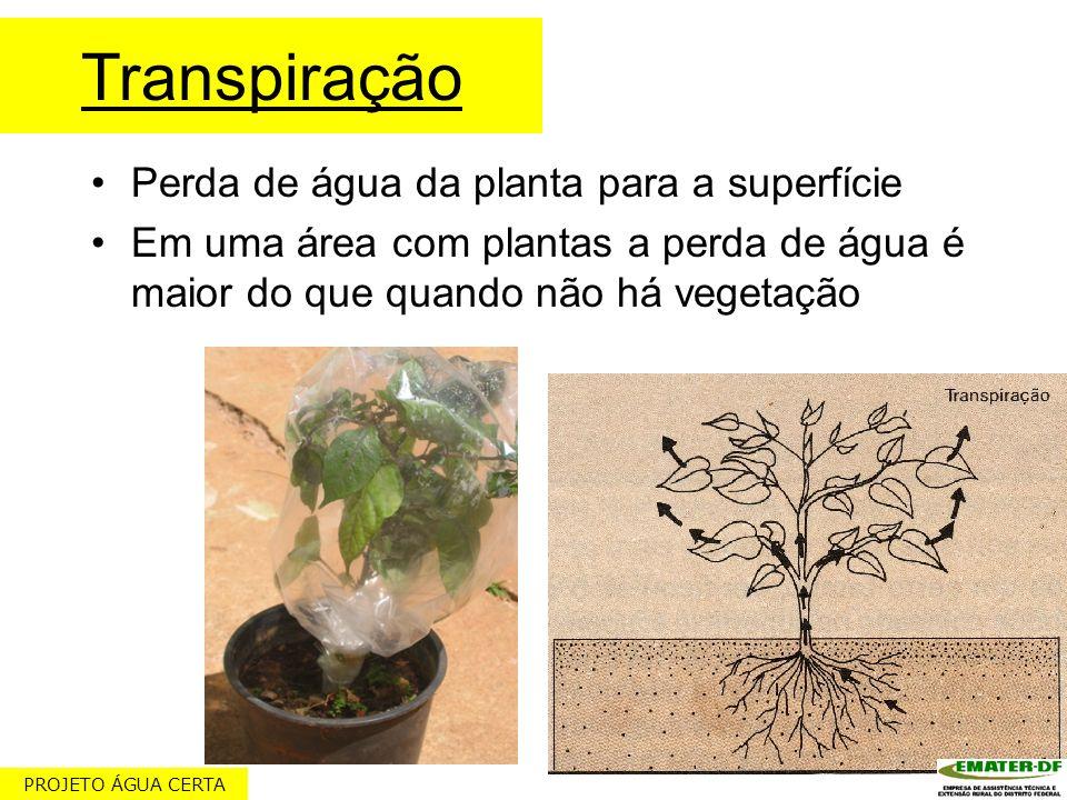 Transpiração Perda de água da planta para a superfície Em uma área com plantas a perda de água é maior do que quando não há vegetação PROJETO ÁGUA CER