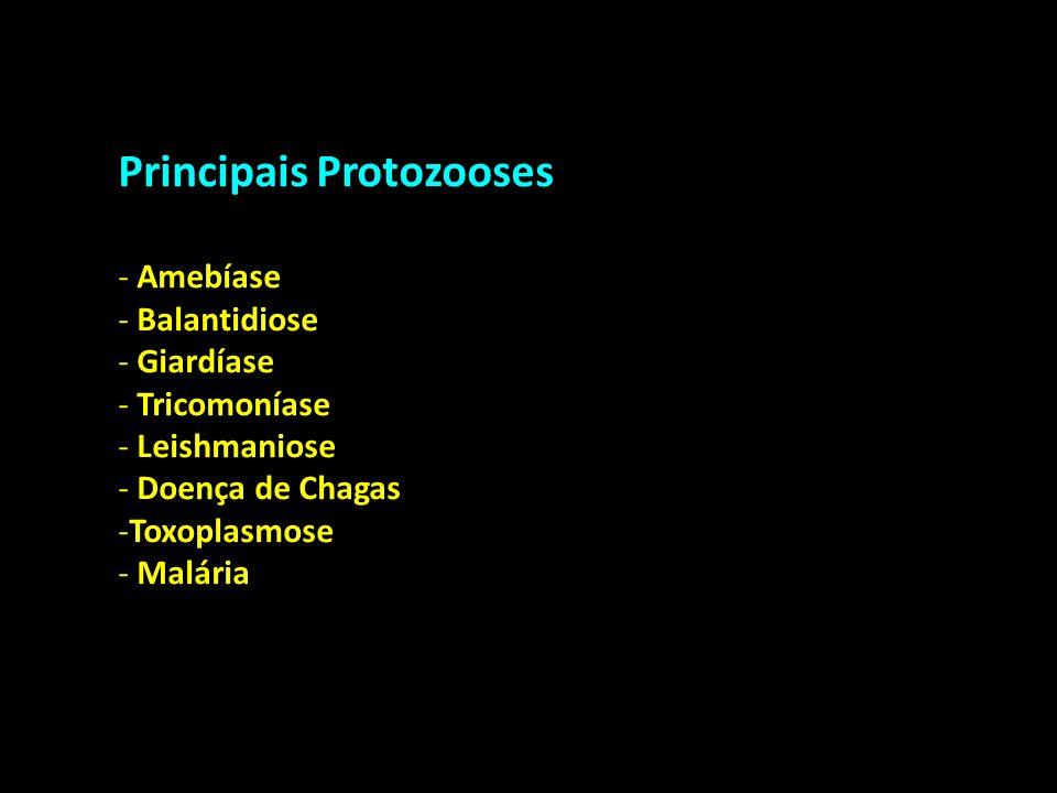Principais Protozooses - Amebíase - Balantidiose - Giardíase - Tricomoníase - Leishmaniose - Doença de Chagas -Toxoplasmose - Malária