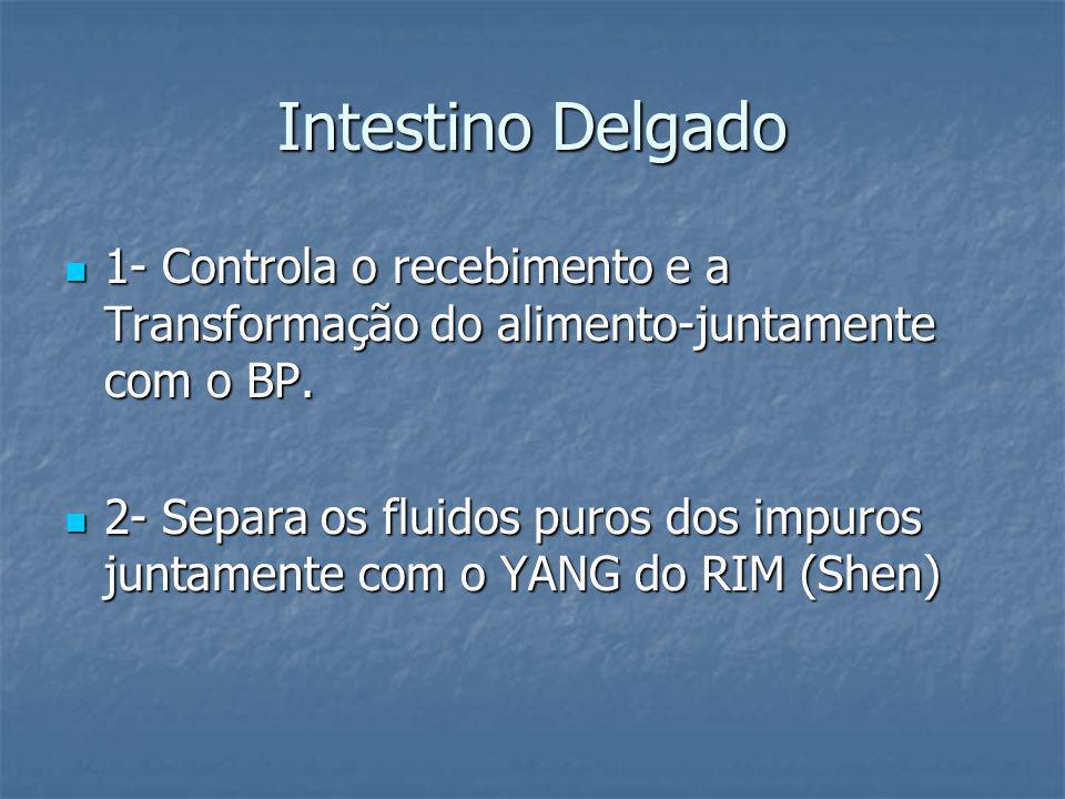 Intestino Delgado 1- Controla o recebimento e a Transformação do alimento-juntamente com o BP. 1- Controla o recebimento e a Transformação do alimento