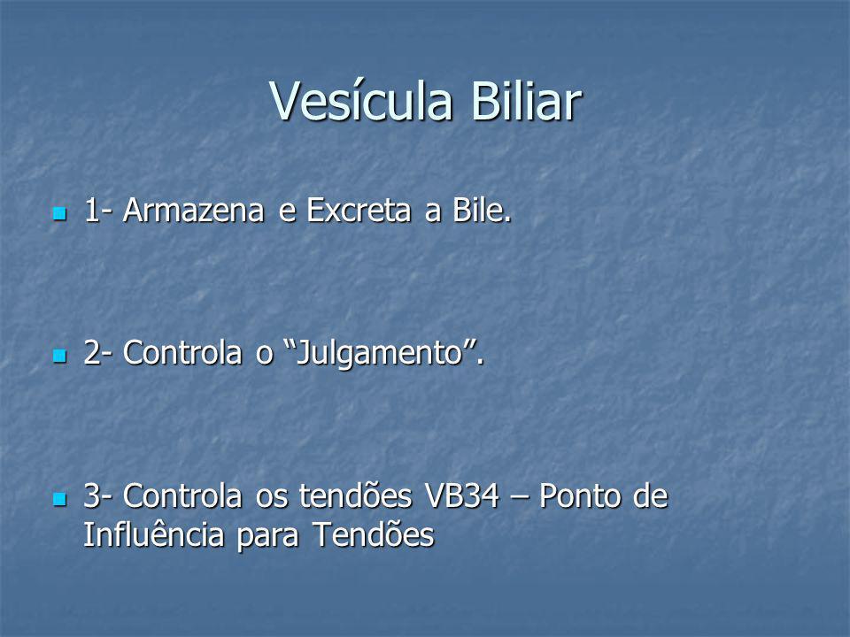 Vesícula Biliar 1- Armazena e Excreta a Bile. 1- Armazena e Excreta a Bile. 2- Controla o Julgamento. 2- Controla o Julgamento. 3- Controla os tendões