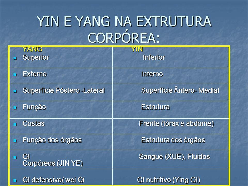 YIN E YANG NA EXTRUTURA CORPÓREA: YANG YIN Superior Inferior Superior Inferior Externo Interno Externo Interno Superfície Póstero -Lateral Superfície