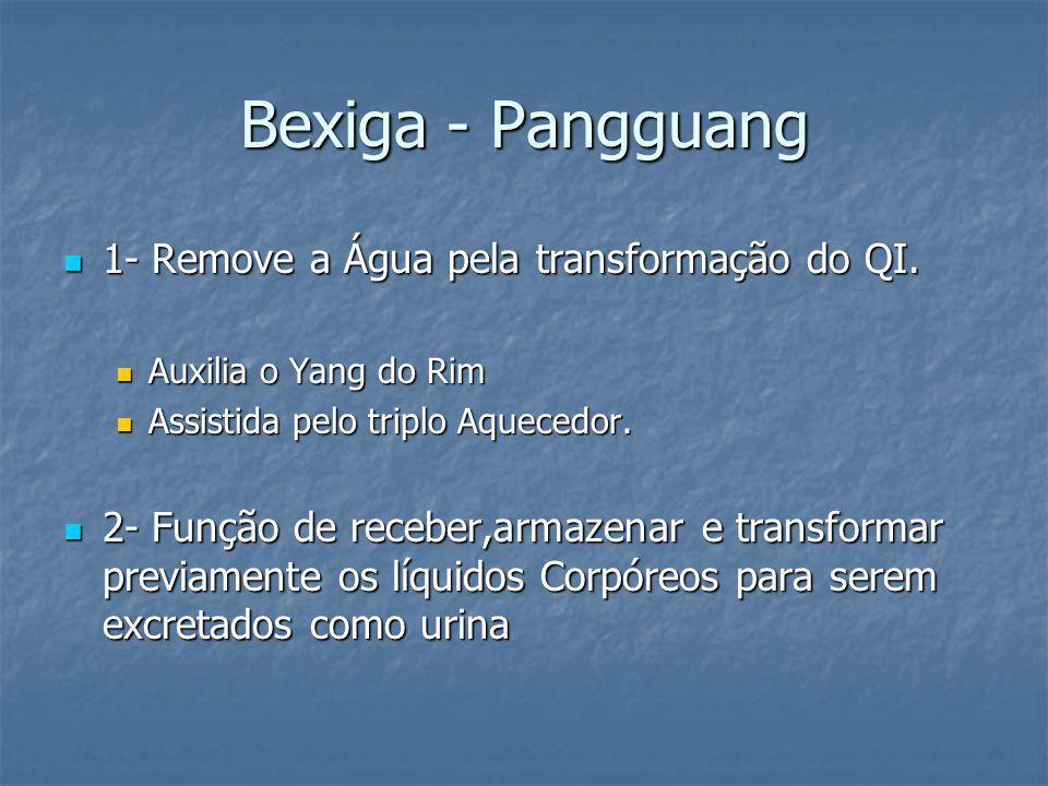 Bexiga - Pangguang 1- Remove a Água pela transformação do QI. 1- Remove a Água pela transformação do QI. Auxilia o Yang do Rim Auxilia o Yang do Rim A