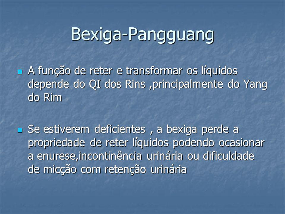 Bexiga-Pangguang A função de reter e transformar os líquidos depende do QI dos Rins,principalmente do Yang do Rim A função de reter e transformar os l