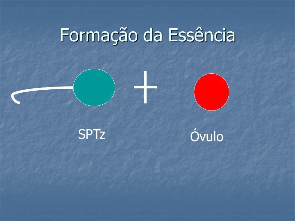 Formação da Essência SPTz Óvulo