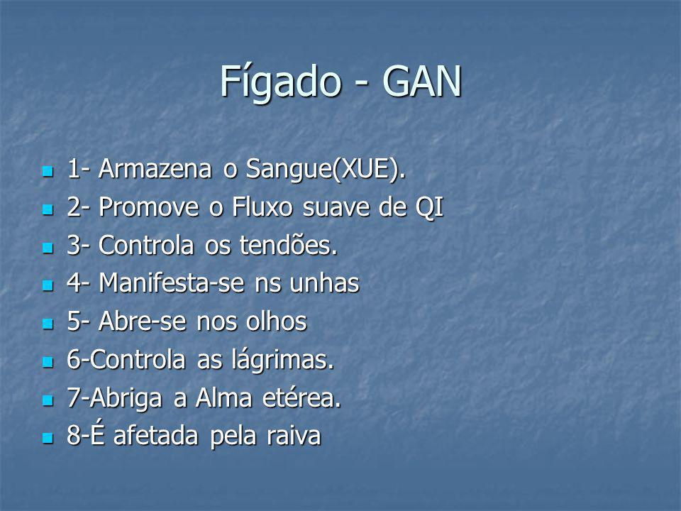 Fígado - GAN 1- Armazena o Sangue(XUE). 1- Armazena o Sangue(XUE). 2- Promove o Fluxo suave de QI 2- Promove o Fluxo suave de QI 3- Controla os tendõe