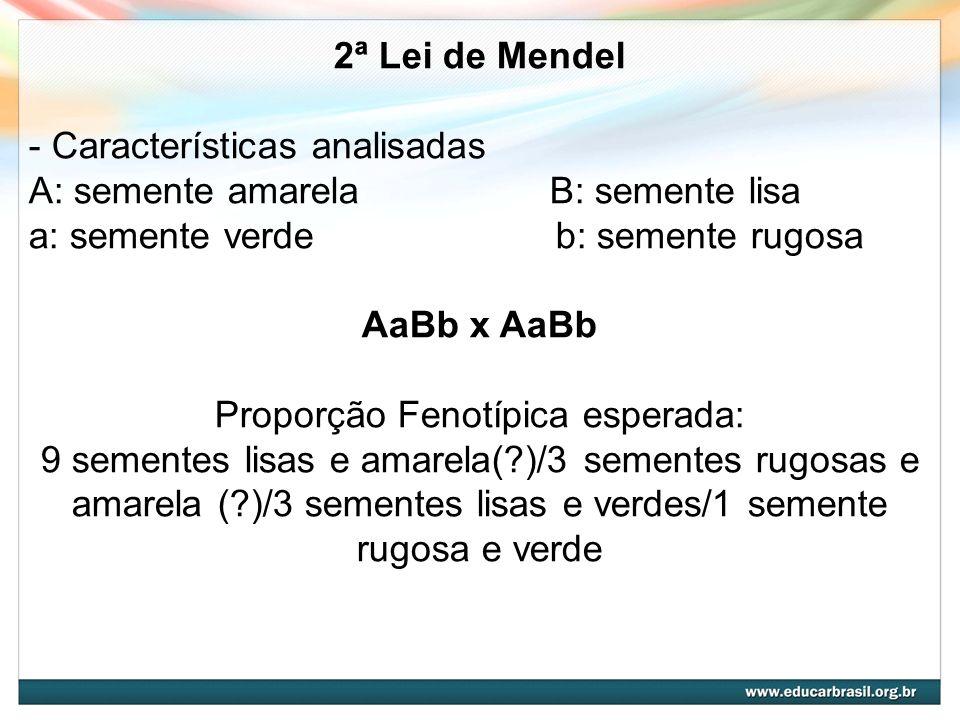 2ª Lei de Mendel - Características analisadas A: semente amarela B: semente lisa a: semente verde b: semente rugosa AaBb x AaBb Proporção Fenotípica e