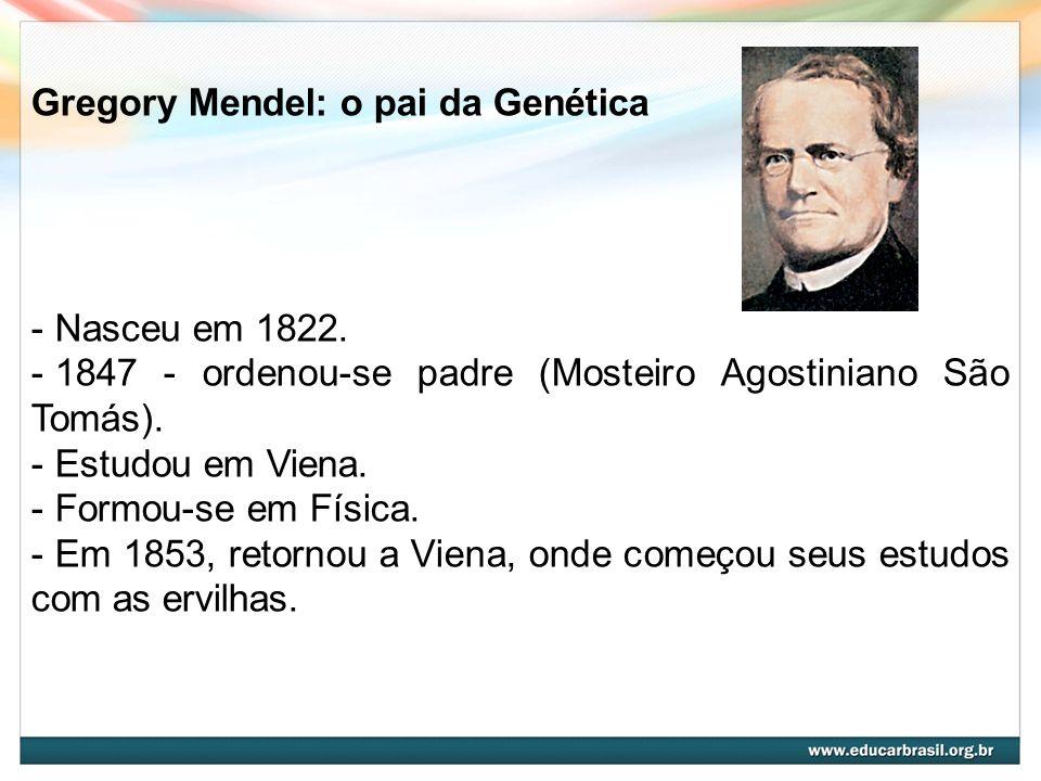 Gregory Mendel: o pai da Genética - Nasceu em 1822. - 1847 - ordenou-se padre (Mosteiro Agostiniano São Tomás). - Estudou em Viena. - Formou-se em Fís