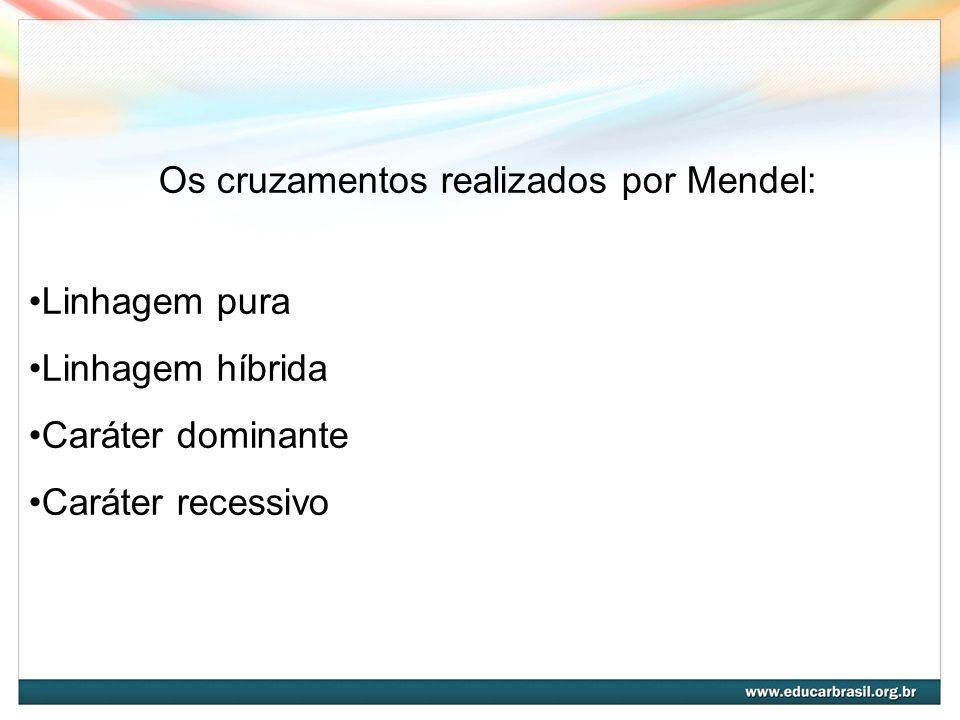 Os cruzamentos realizados por Mendel: Linhagem pura Linhagem híbrida Caráter dominante Caráter recessivo