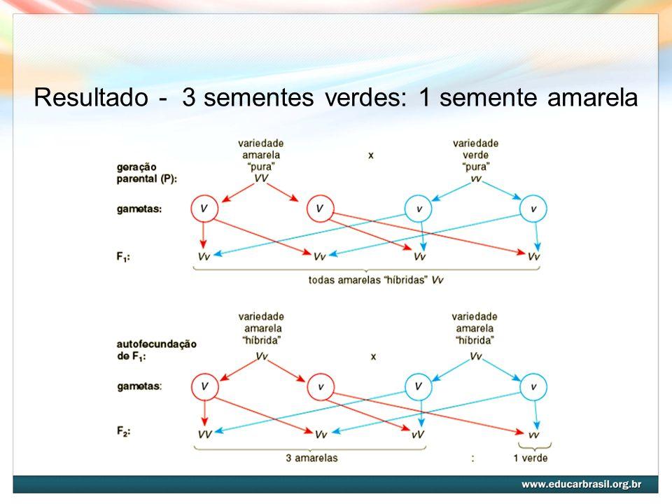1ª Lei de Mendel É a Lei da Segregação dos fatores, em que os fatores que condicionam uma característica segregam-se na formação dos gametas; estes, portanto, são puros com relação a esse fator.