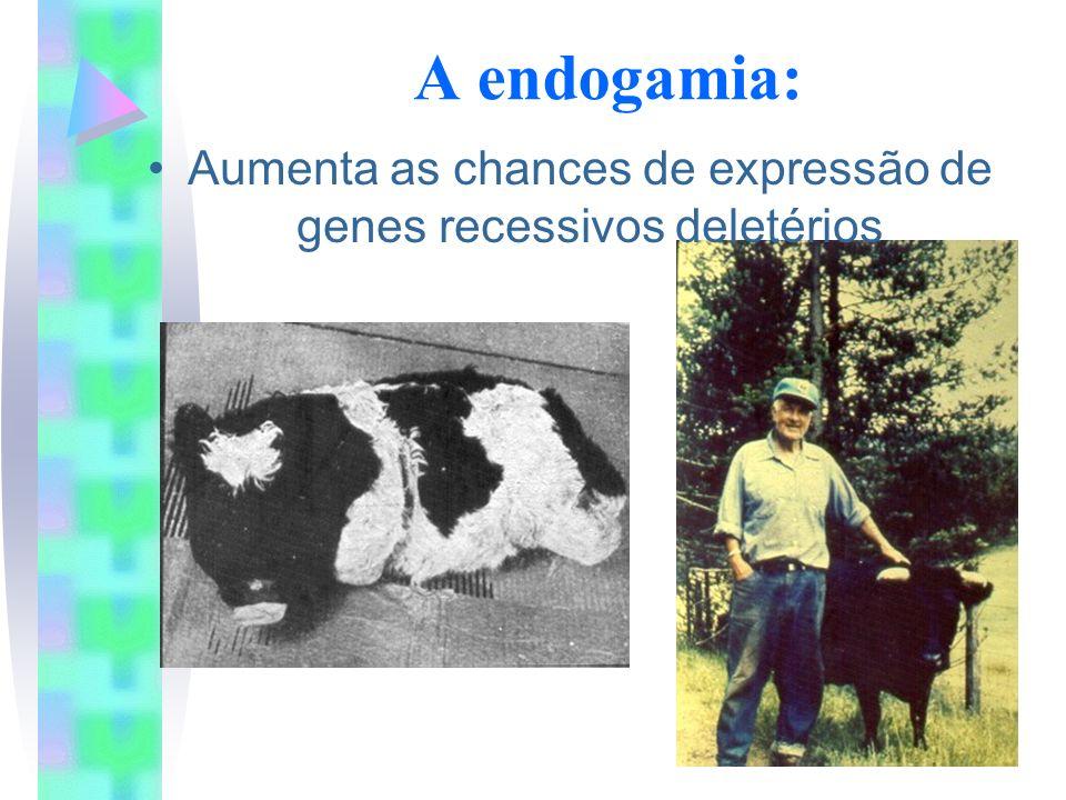 A endogamia: Aumenta as chances de expressão de genes recessivos deletérios