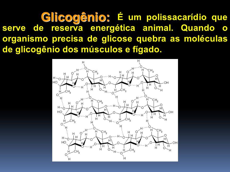 Glicogênio: É um polissacarídio que serve de reserva energética animal. Quando o organismo precisa de glicose quebra as moléculas de glicogênio dos mú