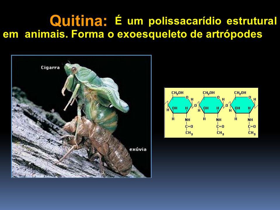 Quitina: É um polissacarídio estrutural em animais. Forma o exoesqueleto de artrópodes