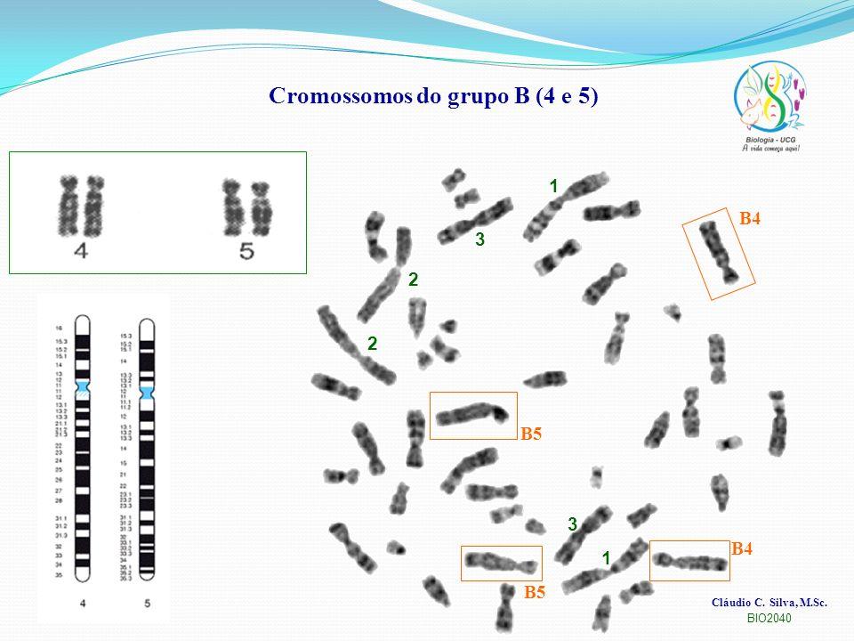 Cláudio C. Silva, M.Sc. BIO2040 Cromossomos do grupo B (4 e 5) 1 1 2 2 3 3 B4 B5