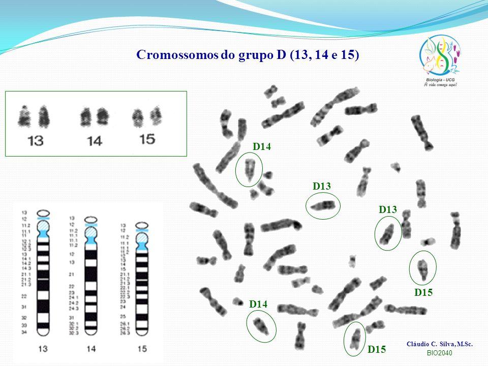 Cláudio C. Silva, M.Sc. BIO2040 Cromossomos do grupo D (13, 14 e 15) D13 D15 D14