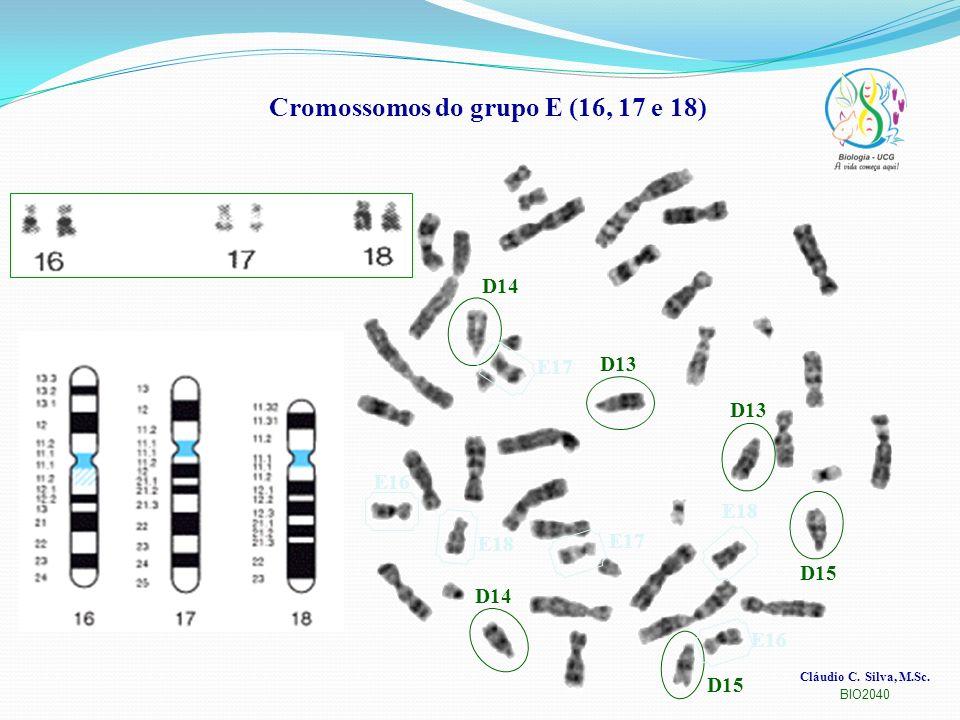 Cláudio C. Silva, M.Sc. BIO2040 Cromossomos do grupo E (16, 17 e 18) D13 D15 D14 E16 E17 E18