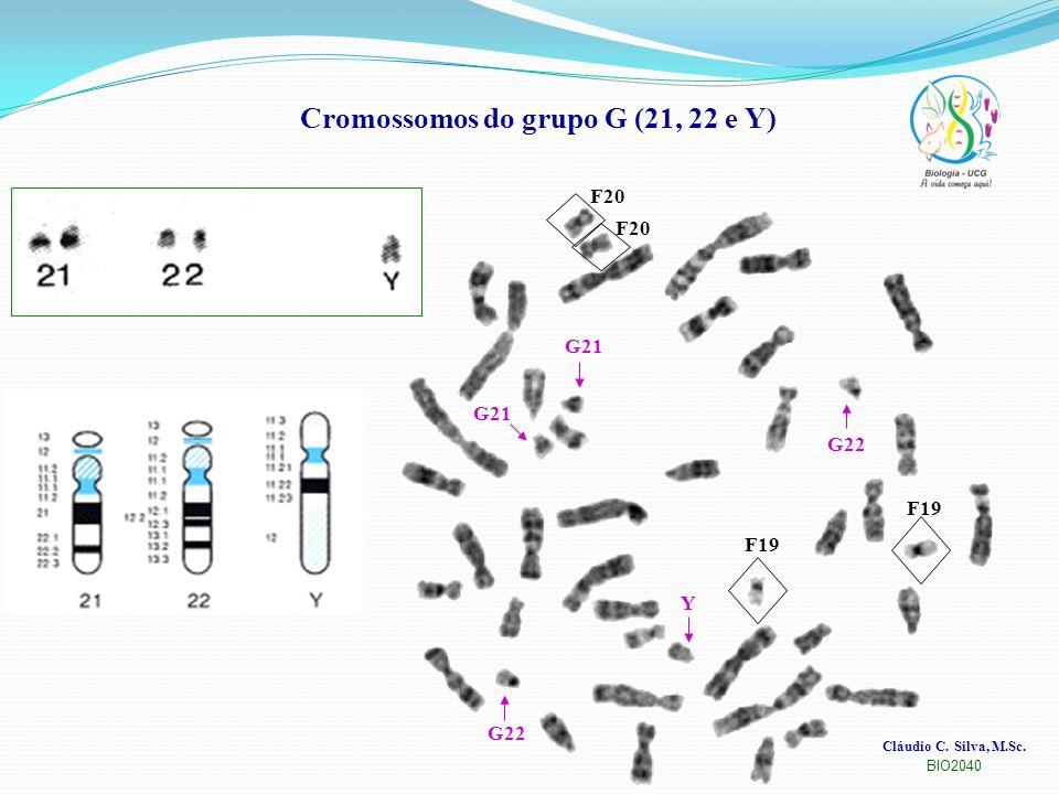 Cláudio C. Silva, M.Sc. BIO2040 Cromossomos do grupo G (21, 22 e Y) F20 F19 G21 G22 Y