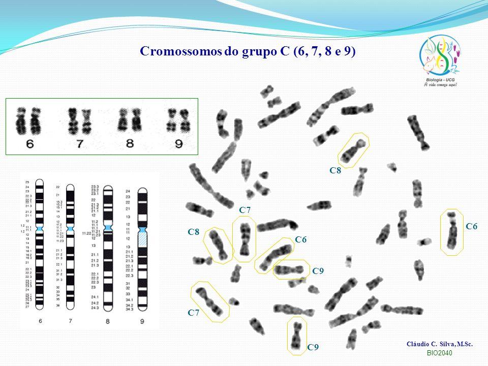 Cláudio C. Silva, M.Sc. BIO2040 Cromossomos do grupo C (6, 7, 8 e 9) C6 C7 C8 C9