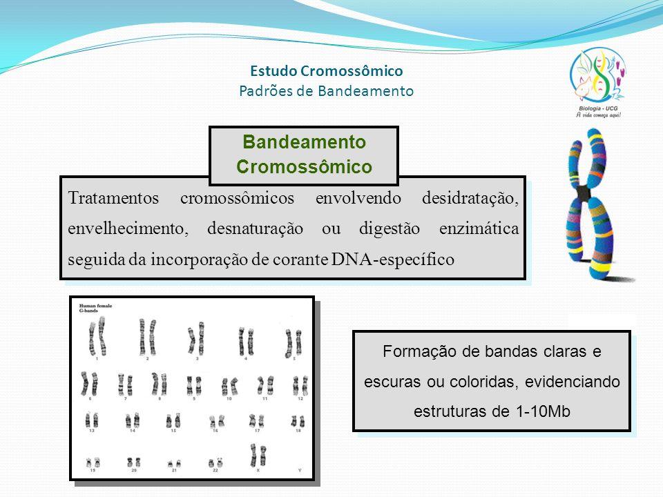 Estudo Cromossômico Padrões de Bandeamento Tratamentos cromossômicos envolvendo desidratação, envelhecimento, desnaturação ou digestão enzimática segu